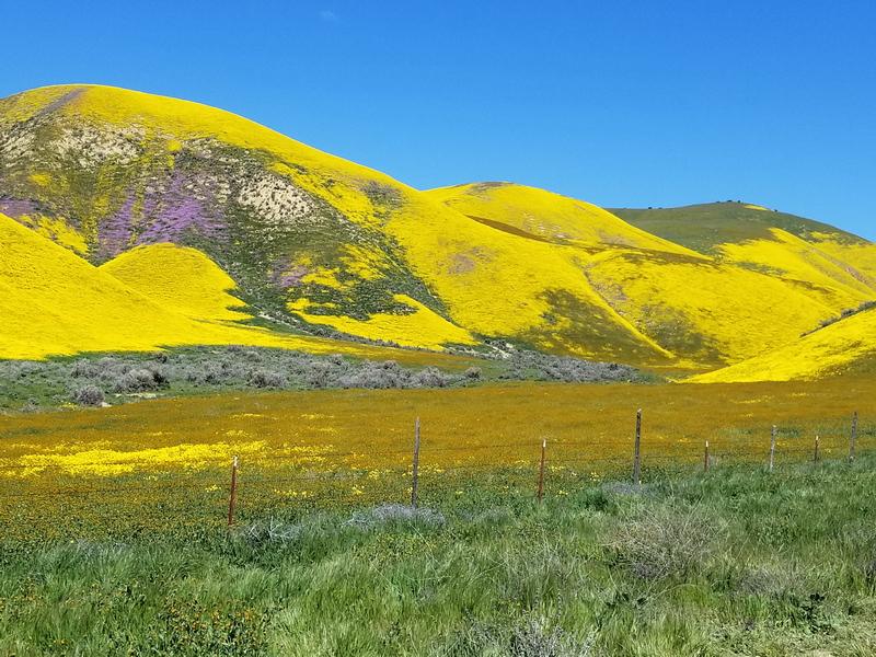 Carrizo National Monument 20190402_113818.jpg